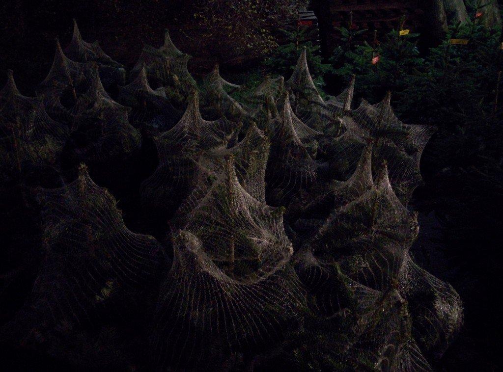 spookytrees05dec15