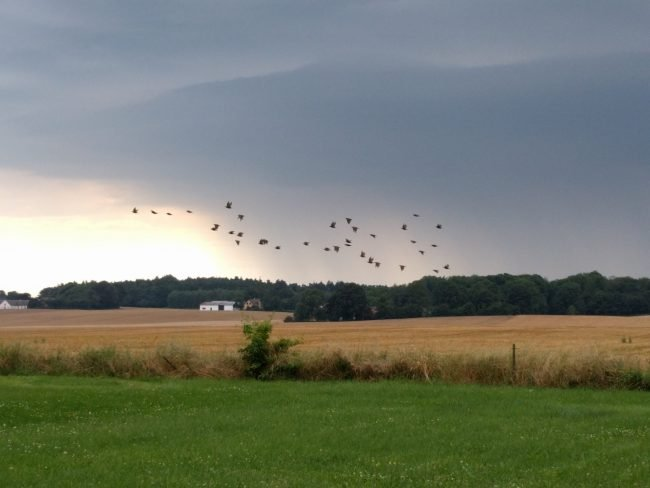Fugleflok over marker på Bornholm.
