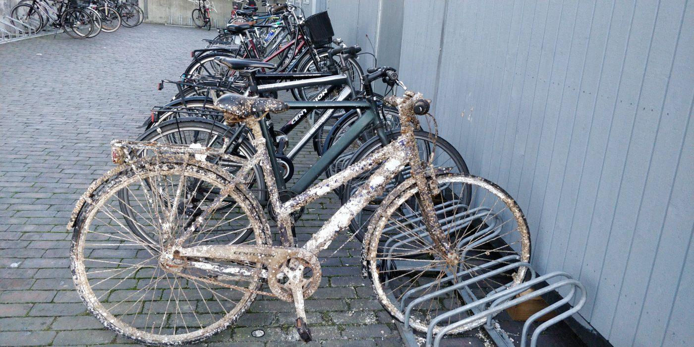 Cykler i et cykelstativ. Den forreste har tydeligvis ligget i havnen et godt stykke tid - den er fyldt med ruger.
