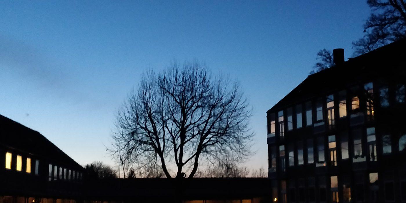 Aftenhimmel, stort træ uden blade