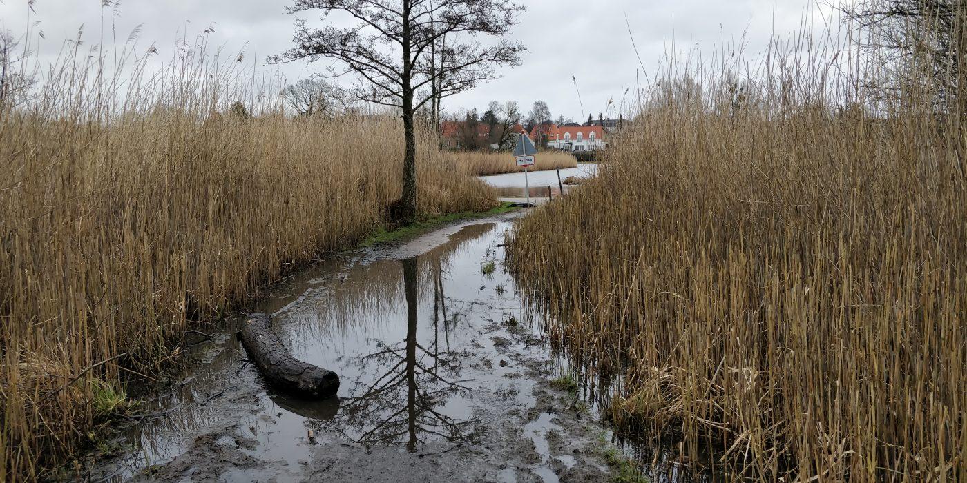 Stien mod Gentofte sø er helt oversvømmet.