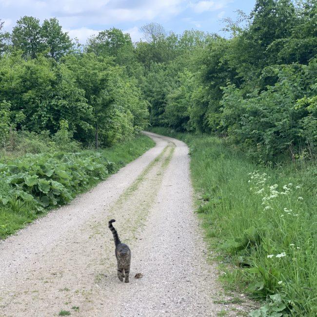 Lille kat på vejen